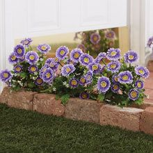 All-Weather Forever Blooms - Purple Daisies