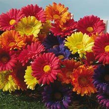 All-Weather Forever Blooms - Colorful Daisies