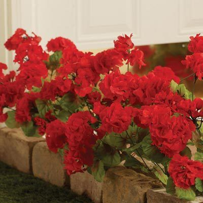 All-Weather Forever Blooms - Red Geraniums