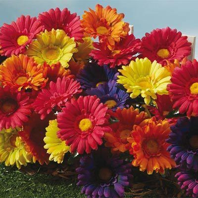 All-Weather Forever Blooms - Colorful Daisy